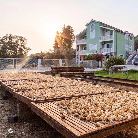 Ploce, Croatia: Vijgen liggen te drogen voordat ze de handel in gaan. Dit is logeren bij de boer op z'n Kroatisc