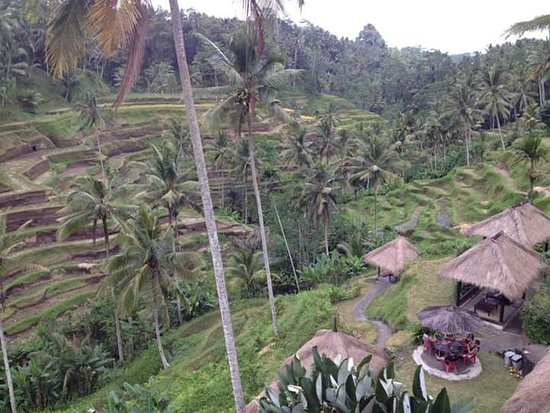 Lovina Beach, Indonesien: Tegalalang rice terrace