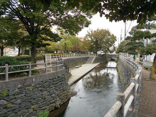 Kurume, Japón: 池町川の親水ゾーン越しに眺めた三本松公園