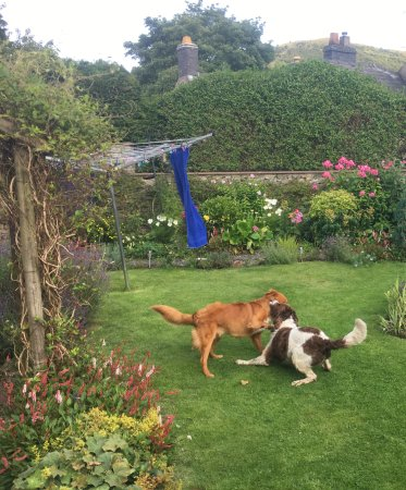 Bradwell, UK: Dogs playing in the garden