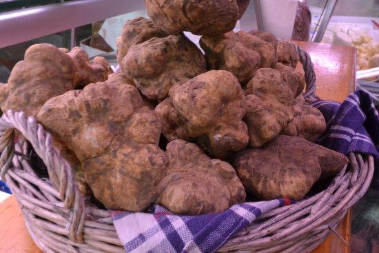 "Noventa Padovana, Italia: The precious White Truffle ""Tartufo bianco d'Alba"" at Alba annual truffle fair exhibition"
