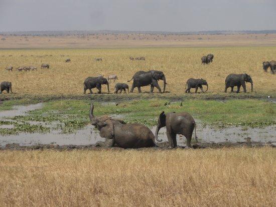 Un incroyable safari