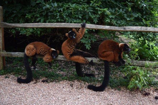 ARTIS Amsterdam Royal Zoo: photo0.jpg