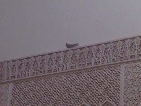 Riad Amina: photo0.jpg