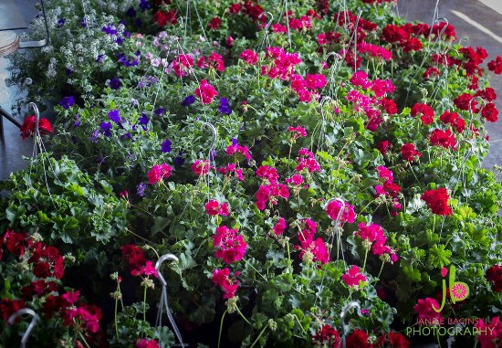 Othello, WA: hanging baskets available in the spring.