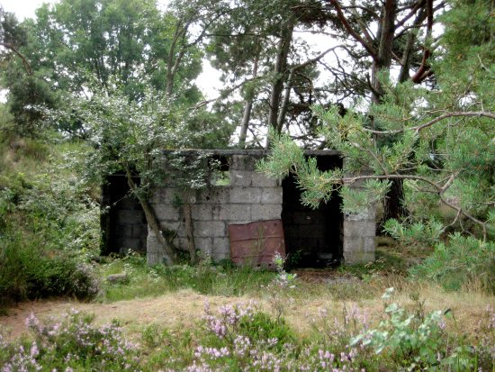 Mehlinger Heide: Relikt aus der Vergangenheit