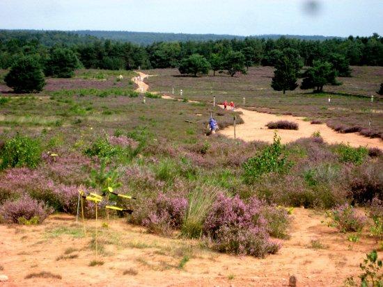 Mehlinger Heide: Blick über die Heide
