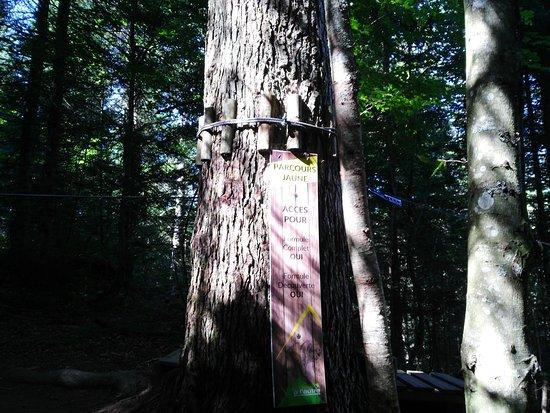 La Feclaz, França: Accrobranche D'un arbre a l'autre
