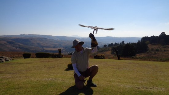 Winterton, Zuid-Afrika: Fish Eagle show