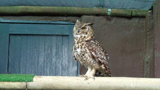 Winterton, Zuid-Afrika: Owl