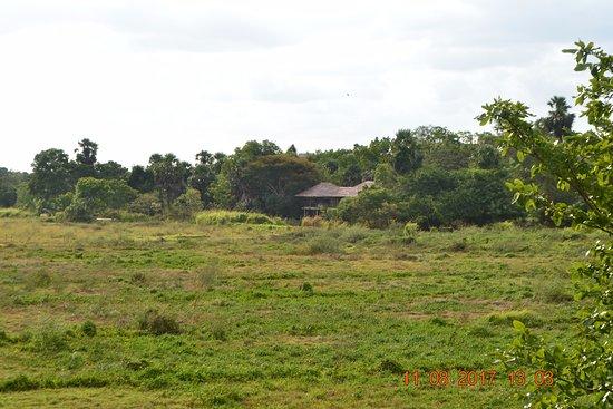 Thirappane, ศรีลังกา: Spot the neighbours