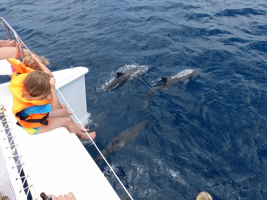 Kralendijk, Bonaire: Dolphins during a private tour with the Catamaran Mushi Mushi