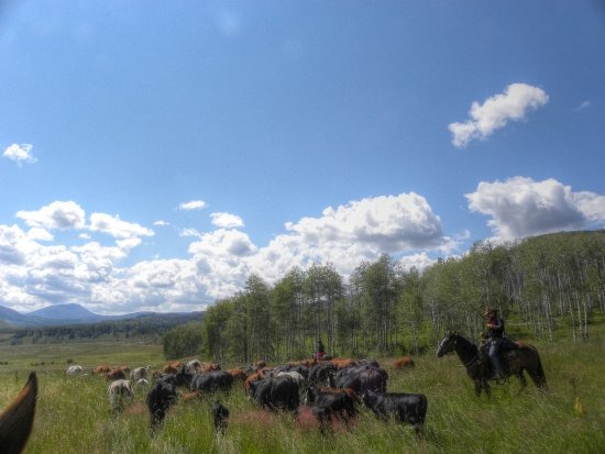 High Country Trails: Trough some tall grass.