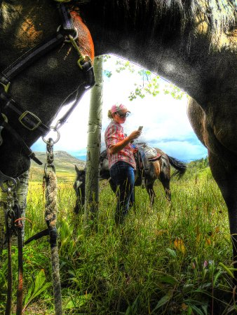 High Country Trails: Cattle are in. Time for a break.