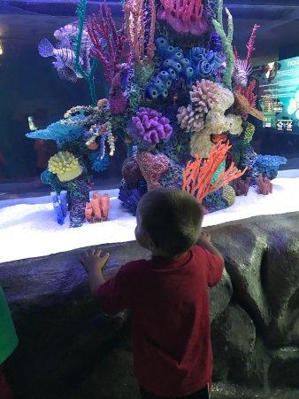 The Maritime Aquarium: photo1.jpg
