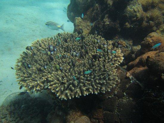 Scuba Nosy Be : Korallen