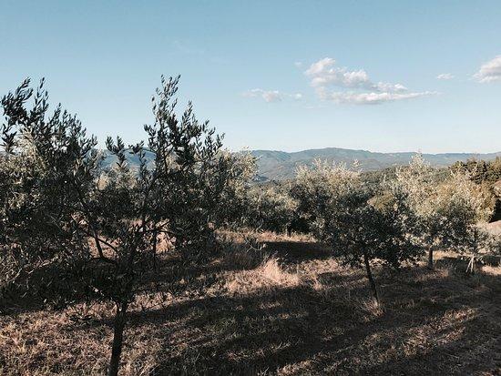 Vicchio, İtalya: photo1.jpg