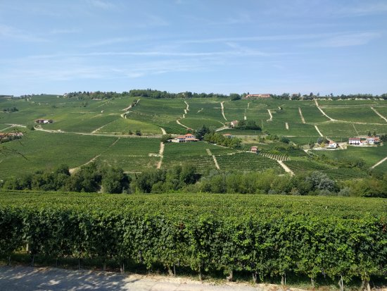 Barolo, Italia: The view from the winery
