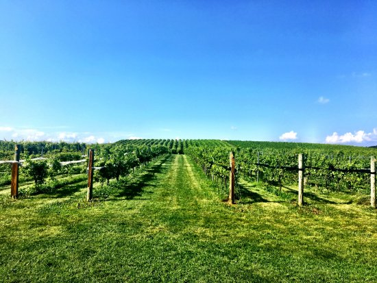New Tripoli, PA: Vineyard