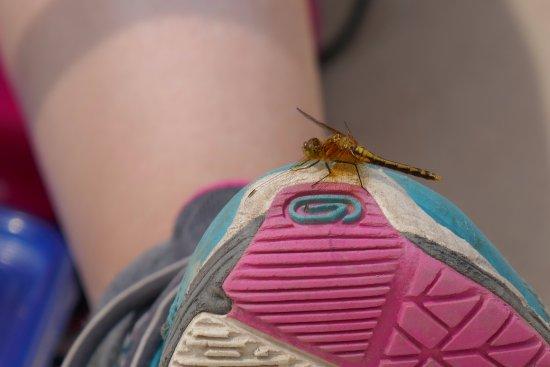 Golden, Canada: Dragonfly