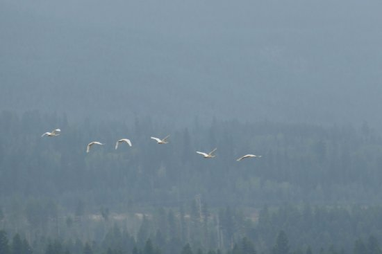 Columbia Wetlands Outpost : Birds flying up from the riverbank