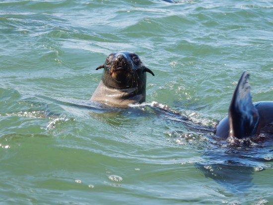Walvis Bay, Namibia: photo1.jpg