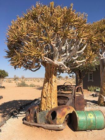Fish River Canyon, Namibia: Autowrak met kokerboom