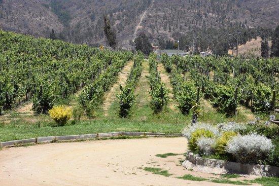 Viña Casa Marín: viñedos