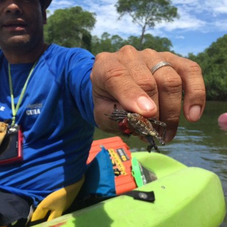 Dominical, Costa Rica: Felix showing us a crab