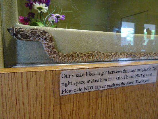 Hulbert, OK: snake in tank