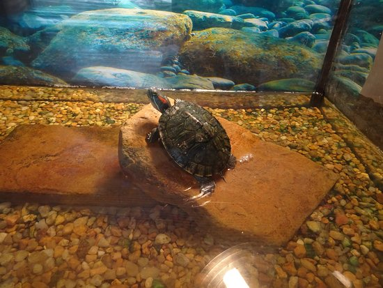 Hulbert, OK: turtle in tank