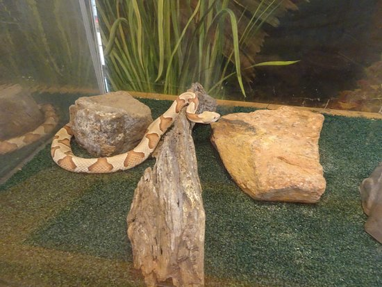 Sequoyah State Park: snake in tank