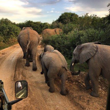 เกรอัมสทาวน์, แอฟริกาใต้: photo2.jpg