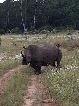 เกรอัมสทาวน์, แอฟริกาใต้: photo3.jpg