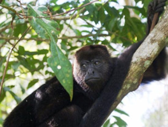 San Antonio, Belize: Ask about visiting the Howler Monkey Sanctuary, a guest favorite.