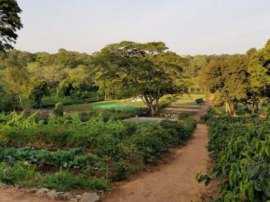 Karatu, Tanzania: The fresh vegetable gardens