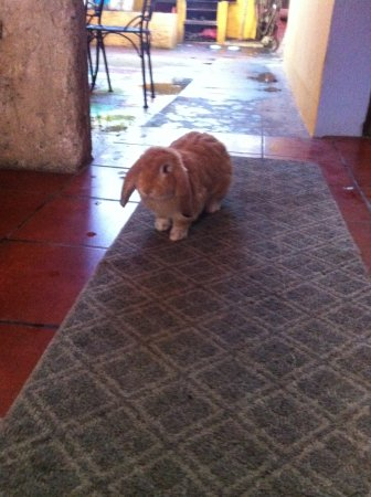 A Place to Stay Hostel : Resident Bunny