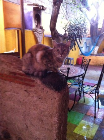 A Place to Stay Hostel: Friendly resident