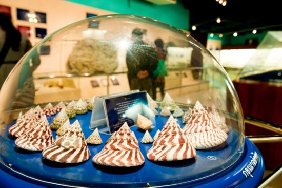 Rawai, Tajlandia: Phuket Seashell Museum