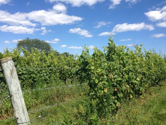 Stonington, CT: Saltwater Farm Vineyard