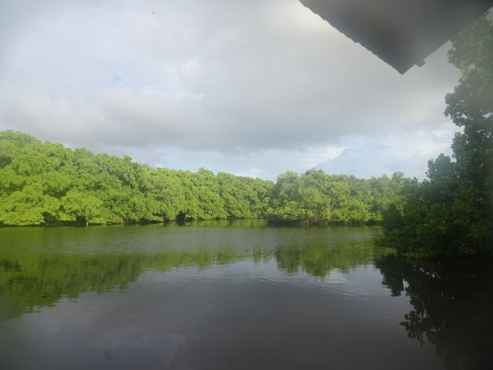 Pacific Treelodge Resort: Mangrove channel off the dock adjacent to the restaurant