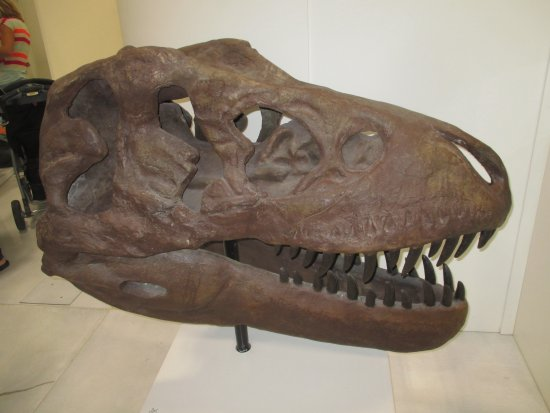 Innisfail, Kanada: Replicat of a tyrannosaurus skull (full size)