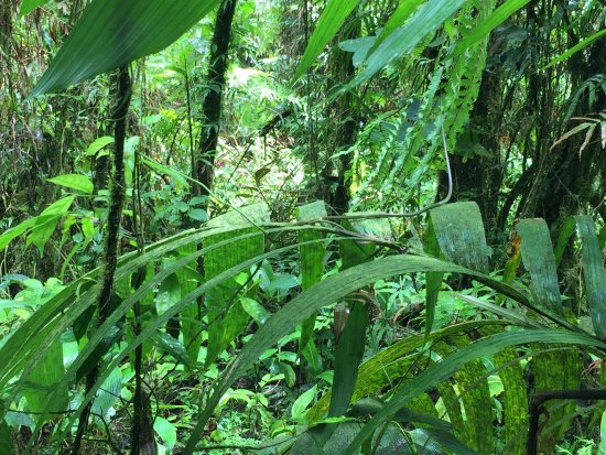 Tenorio National Park Bild