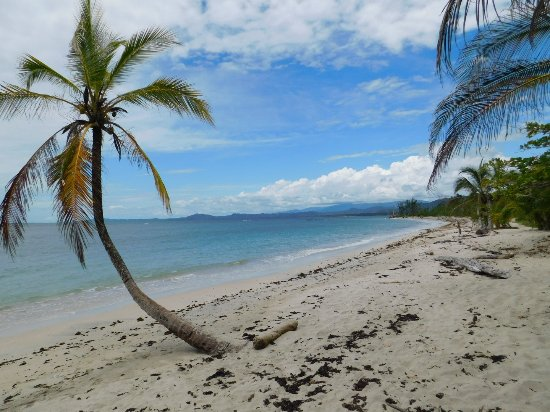 Cahuita National Park : DSCN0437_large.jpg