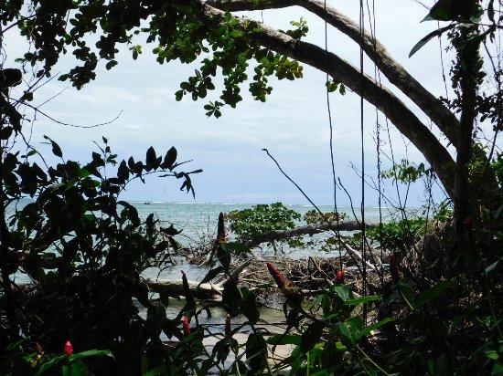 Cahuita National Park : DSCN0416_large.jpg