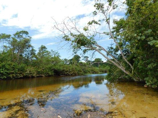 Cahuita National Park : DSCN0377_large.jpg