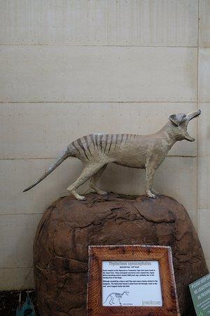 Augusta, ออสเตรเลีย: replica of extinct 'tiger'