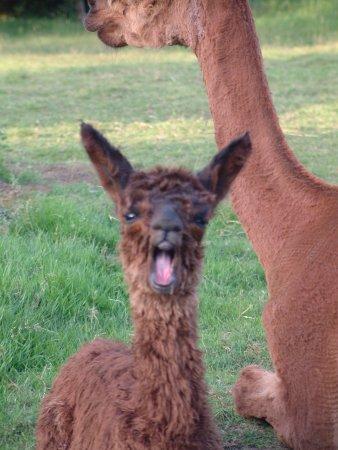 Woodburn, OR: Big yawn.....