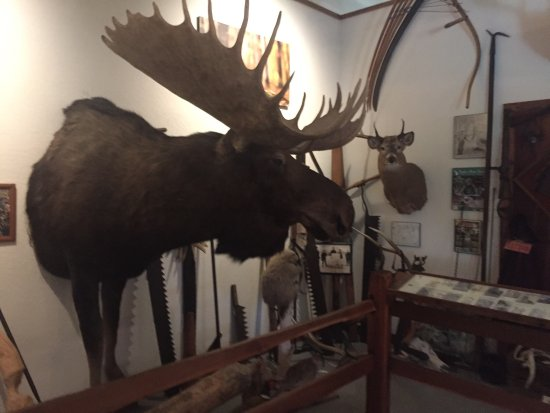 Grass Lake, MI: Michigan Whitetail Hall of Fame Museum