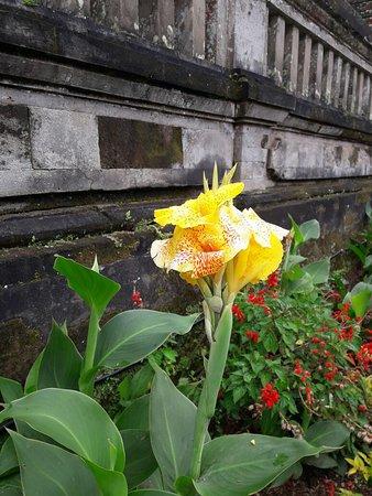 Manggis, Indonesia: wunderschöne gelbe Canna